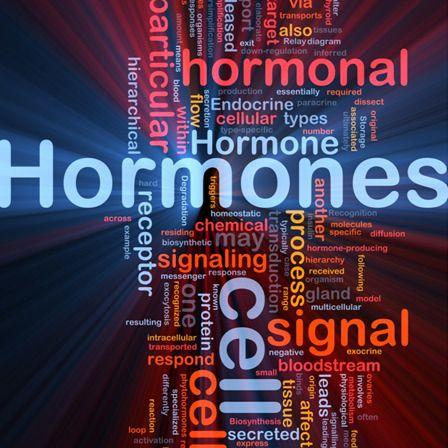 hormonelles Ungleichgewicht Test