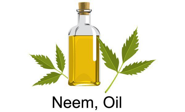 Neem-Öl Haarwachstum