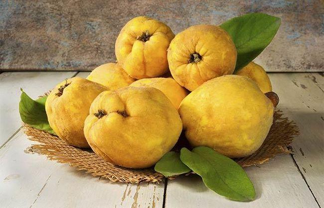 15 erstaunliche gesundheitlichen Vorteile von Quitten Obst Foto