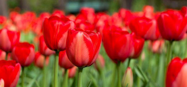 25 Most Beautiful Rote Blumen Foto