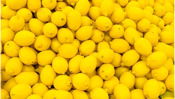 Lemon Hilft Hilfe Wachstum
