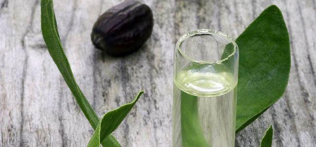 Jojoba-Öl für das Haarwachstum Foto