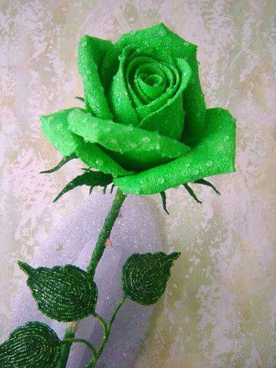 Künstlich gefärbt Rose
