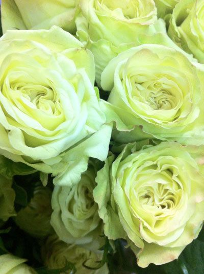 Green Tea Rose