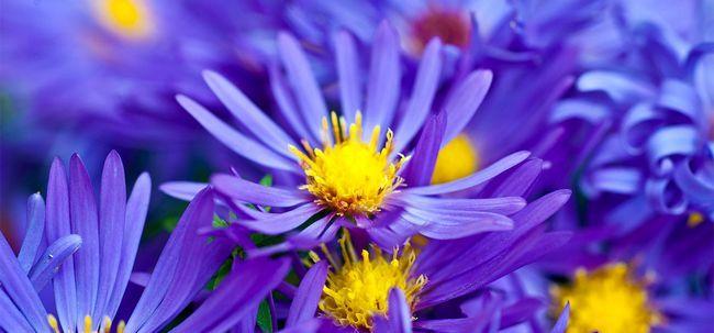 Top 10 Most Beautiful violette Blumen Foto
