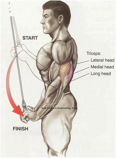 Vorteile der Trizeps-Übungen