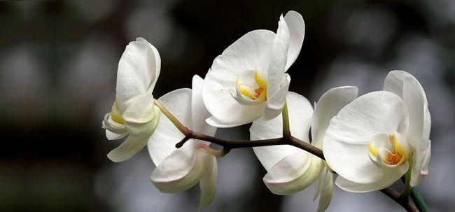 Top 25 Most Beautiful Weiße Blumen Foto