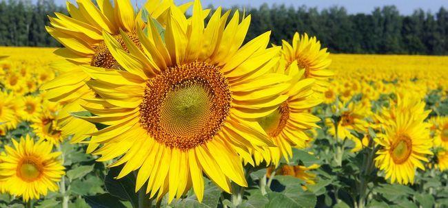 Top 25 Most Beautiful Gelbe Blumen Foto